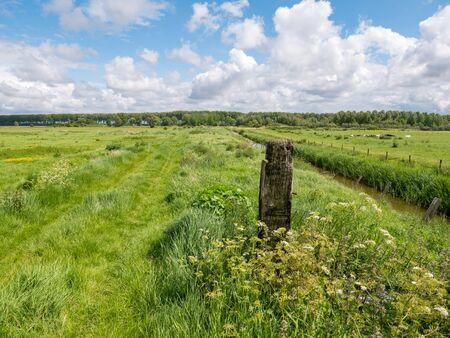 Panorama des prairies et des fossés, campagne de Flandre occidentale près de Damme, Flandre orientale, Belgique