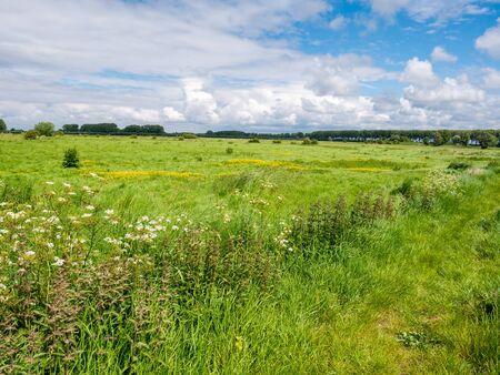 Landscape with green meadows in polder near Damme in West Flanders, Belgium