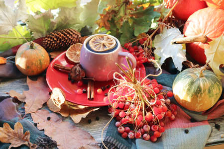 A cup of hot drink, berries, pumpkins, spices, a scarf, autumn leaves on the background of the window, the concept of home comfort, healthy food, tea for the common cold Standard-Bild