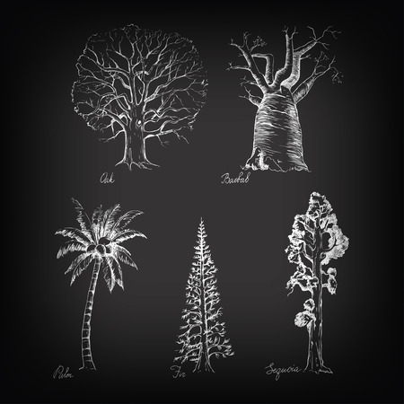 trees illustration: Vector set of hand-drawing style of graphic trees on blackboard background for design Illustration