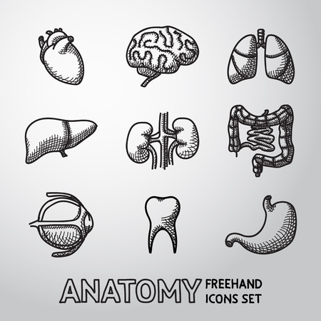 human anatomy: Internal human organs handdrawn icons set with - heart and brains, lungs, liver, kidneys, intestine, eye, teeth, stomach. Vector illustration