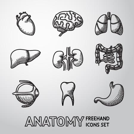 anatomie humaine: organes humains internes icônes Handdrawn définies avec - coeur et le cerveau, les poumons, le foie, les reins, les intestins, les yeux, les dents, l'estomac. Vector illustration