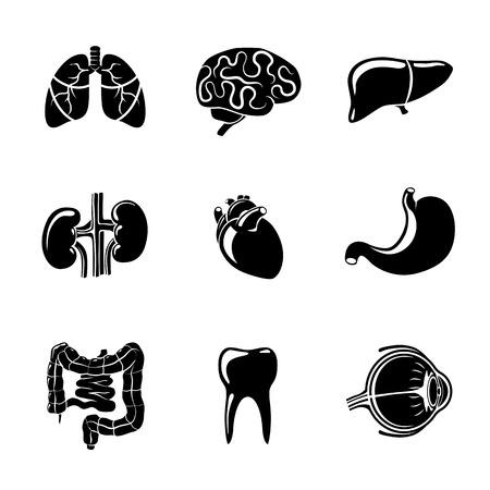 Órganos humanos internos iconos conjunto con - el corazón y el cerebro, los pulmones y el hígado, los riñones, los intestinos, los ojos, los dientes, el estómago. Ilustración vectorial