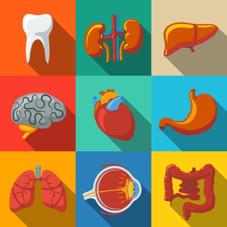 organos internos: Órganos humanos internos planas iconos larga sombra establecen con - el corazón y el cerebro, los pulmones, el hígado, los riñones, los intestinos, los ojos, los dientes, el estómago. Ilustración vectorial