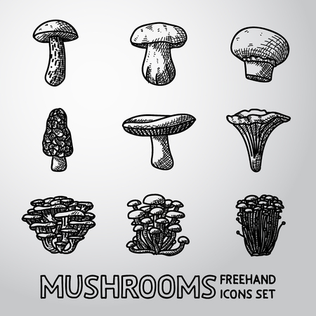 morel: Set of  MUSHROOMS icons - porcini and champignon, morel, russule, chanterelle, oyster, honey agaric, enokitake. Illustration