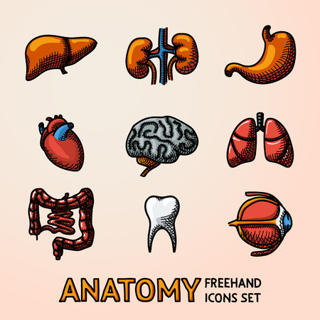 human teeth: Internal human organs handdrawn icons set with - heart, brains, lungs, liver, kidneys, intestine, eye, teeth stomach Vector illustration Illustration