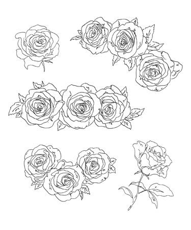 outline drawing: Set di rose. Illustrazione vettoriale.