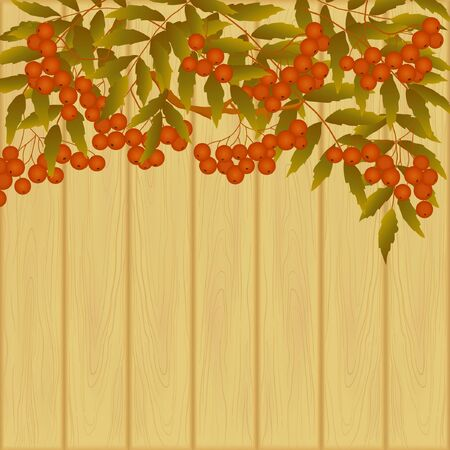 ashberry: decorative card with branch of rowanberry