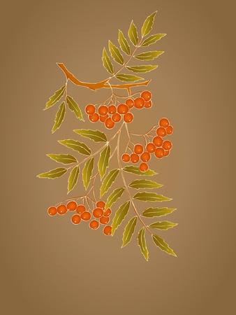 rowanberry: decorative card with branch of rowanberry