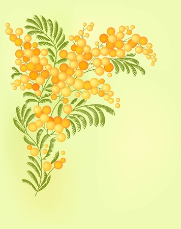 mimosa: floral card with mimosa