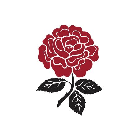 red rose on white Ilustração
