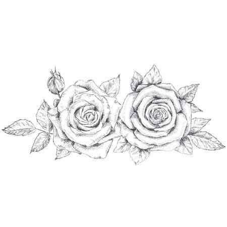 pencil sketch of the roses Ilustração