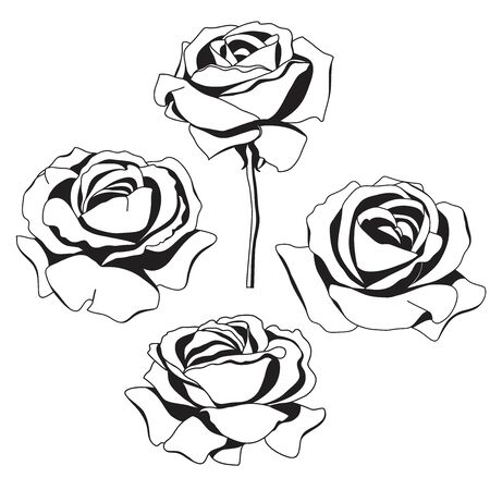 Silhouette of roses on white