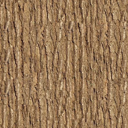 Bark of Elm  Seamless Tileable Texture  photo