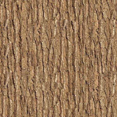 Bark of Elm  Seamless Tileable Texture Stock Photo - 18216033