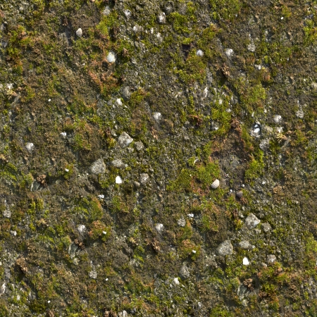 Mossy Wall  Seamless Tileable Texture  photo