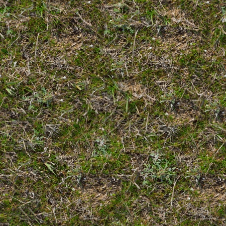 Grass Seamless Tileable Texture  photo