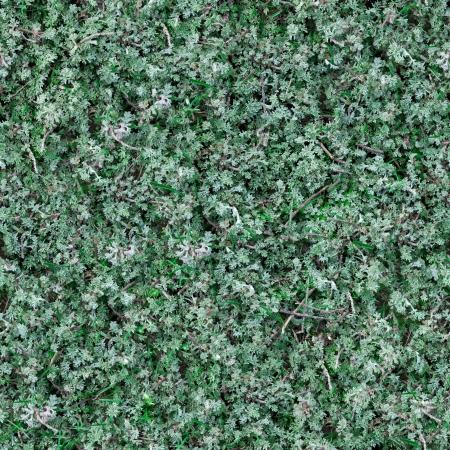 sagebrush: Seamless Tileable Texture of Sage-Brush