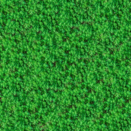 Seamless Tileable Texture of Green Meadow Grass  photo