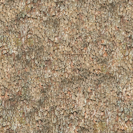 Seamless Tileable Texture of Bark  photo