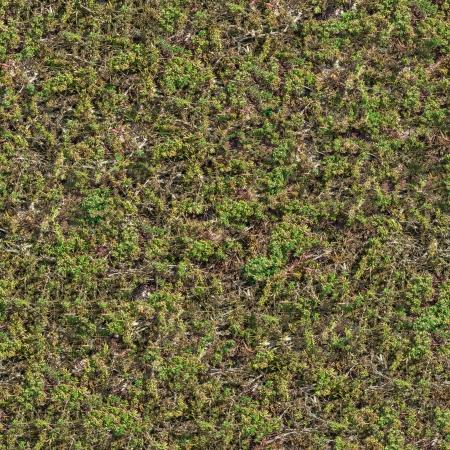 daremny: Bezszwowych tekstur stepie z zielona trawa i suche łodygi Zdjęcie Seryjne