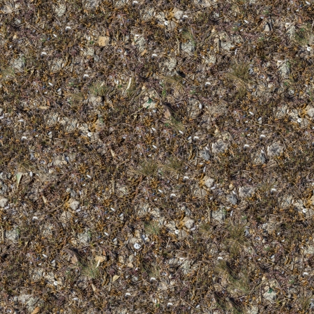 dearth: Seamless Texture of Rocky Soil Covered with Withered Dry Grass, Leaves and Shells. Big Size.