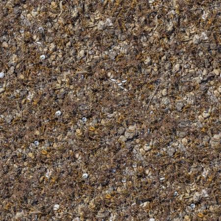 daremny: Seamless Texture of Rocky Gleby Pokryte Suche Suche trawy, liści i łupin Rozmiar Small
