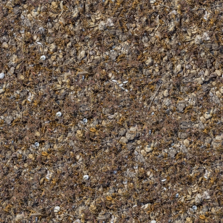 Seamless Texture of Rocky Soil Covered with Withered Dry Grass, Leaves and Shells  Small Size Stock Photo - 22774308