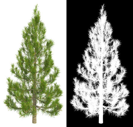Fir-Tree Isolated on White with Detail Raster Mask.
