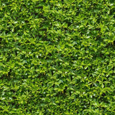 Seamless Tileable Texture of Green Bush