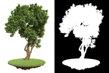 garden green: Garden Green Tree on White Background with Detail Raster Mask  Stock Photo