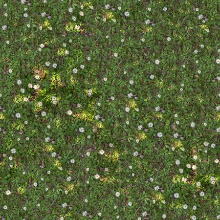 Seamless Tileable Texture of Spring Lawn with White Flowers.