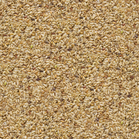 unpolished: Brown Unpolished Rice Background. Seamless Tileable Texture.