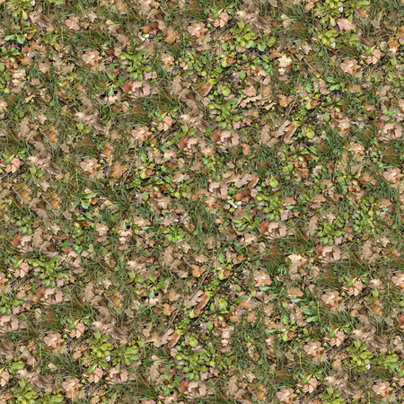 Grass Surface of Oak Grove with Wildflower and Dry Leaves. Seamless Tileable Texture. photo