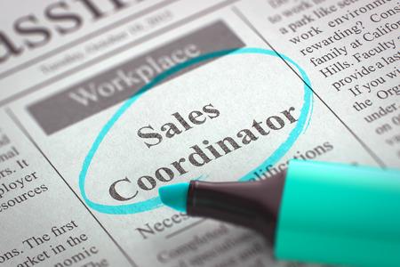 Le vendite Coordinatore - Offerta di lavoro in un giornale, cerchiato con un evidenziatore azzurro. Immagine sfocata con messa a fuoco selettiva. Job Search Concept. 3D.