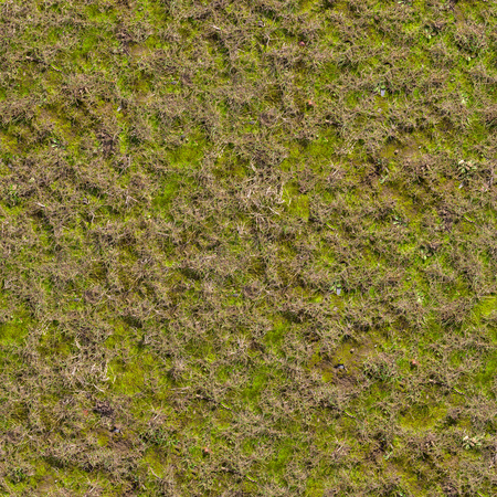 Grass with Moss. Seamless Texture. Stock Photo