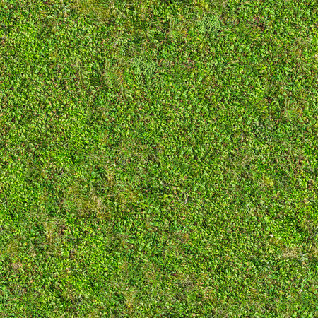 Green Grass. Seamless Tileable Texture. 写真素材