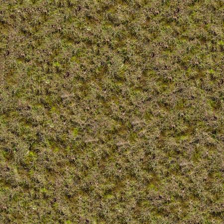 Grass with Moss. Seamless Texture. 免版税图像