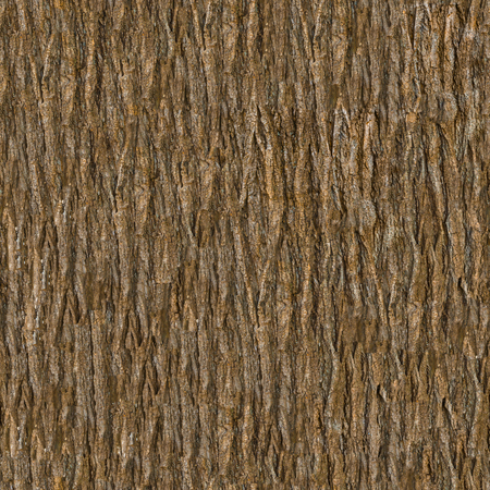 Holzrinde. Nahtlose kippbare Textur. Standard-Bild