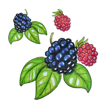 Hand painted watercolor set of berries. Blackberry and leaves isolated on a white background. Perfect for design, banners, card, textile