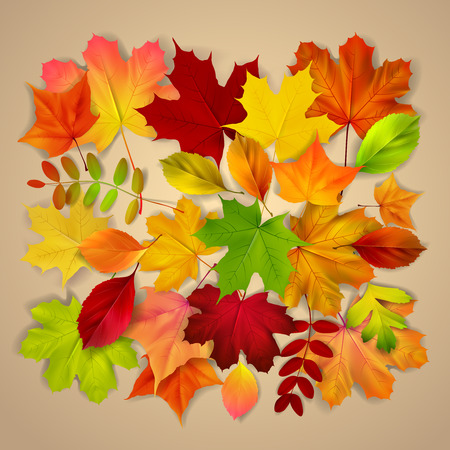 guelder rose: Various autumn leaves on beige background, vector illustration