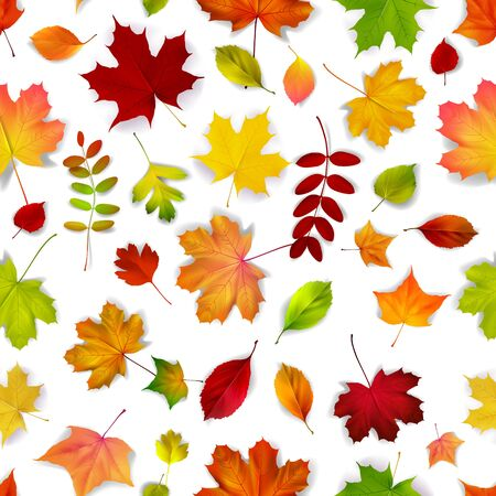 color image: autumn leaves seamless pattern, vector illustration