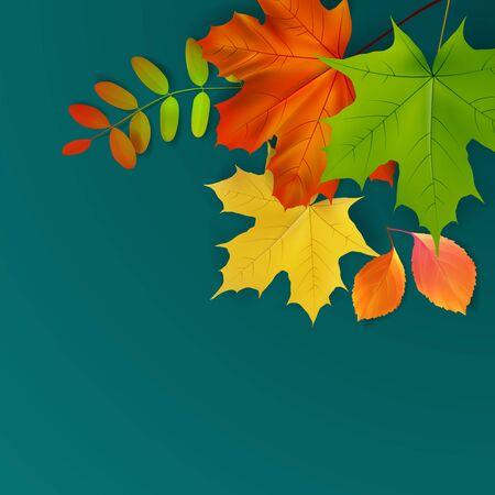 green yellow: green, yellow, orange autumn leaves, vector illustration
