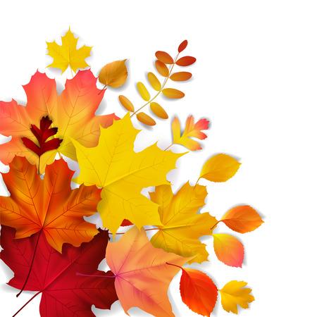 hojas antiguas: Aislado amarillo, naranja, hojas de oto�o rojas, ilustraci�n vectorial