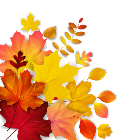Isolated yellow, orange, red autumn leaves, vector illustration Vettoriali