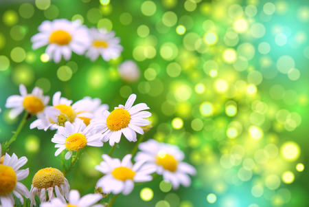 daisies in the garden with bokeh, summer vector illustration