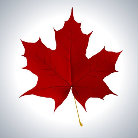 fall leaf: Red maple leaf as an autumn symbol as a seasonal themed concept as an icon of the fall weather