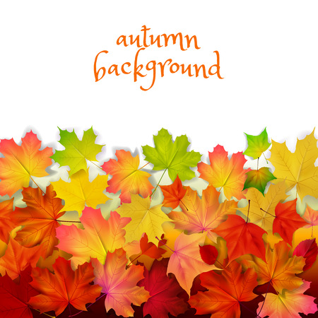 sycamore: Isolated autumn leaves, wall, yellow, orange colors, vector illustration