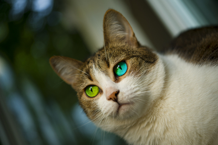 eyed: Blue and green eyed cat