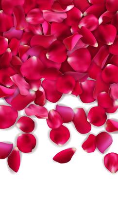romance: Red rose petals. valentine card background, vector illustration Illustration